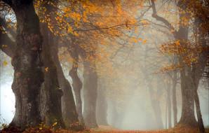 природа, лес, деревья, осень