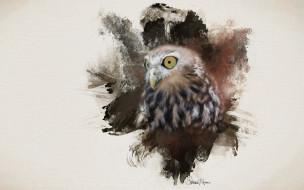 фон, глаза, птица, сова