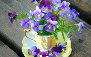 violet, чашка, cup, лепестки, flowers, цветы, анютины глазки