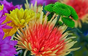 цвет, краски, лепестки, букет, hdr