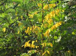 обои для рабочего стола 1920x1440 природа, листья, листики