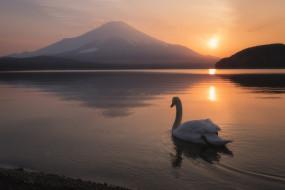 Фудзияма, лебедь, пейзаж, озеро, вулкан, Japan, закат, Япония, Mount Fuji, Озеро Яманака, птица, Lake Yamanaka, гора