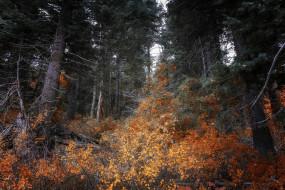 обои для рабочего стола 2048x1367 природа, лес, простор