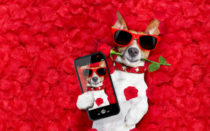 hearts, romantic, valentine, petals, собака, rose, dog, love, лепестки, funny