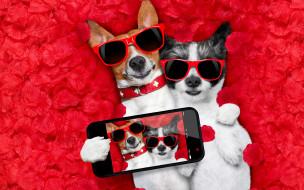 юмор и приколы, dog, love, rose, romantic, лепестки, собака, petals, hearts, funny, valentine