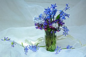 май, медуница, букетик, букеты, цветы, первоцветы, весна, красота, подснежники, пролески, композиция, пушкинария