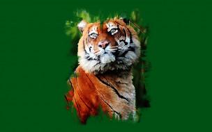 тигр, красавец, взгляд, арт
