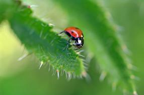 дача, лепестки, макро, лето, божья коровка, июль, флора, насекомые, природа, растения, жуки, красота
