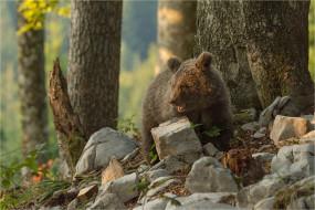 детёныш, камни, животное, хищник, медвежонок, природа, деревья