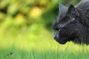 мышка, кошка, природа