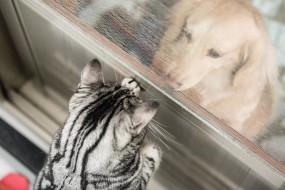 окно, кошка, собака