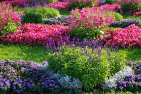 природа, клумба, красота, петергоф, питер, прогулка, россия, сад, санкт-петербург, цветы