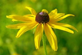 июль, рудбекия, ассоциации, дача, жёлтый цвет, цветок, цветы, лепестки, лето, природа, красота, флора