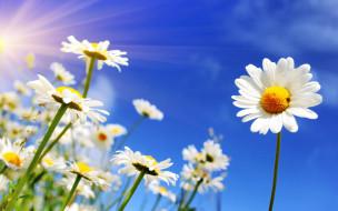 весна, цветы, солнце, небо, spring, ромашки