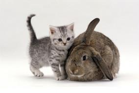 котенок, кролик, серый