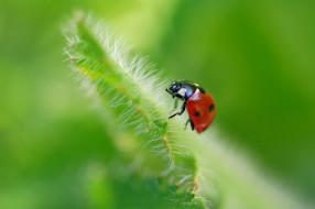 дача, горошек, божья коровка, июль, жуки, макро, лето, лепестки, красота, растения, природа, насекомые, флора