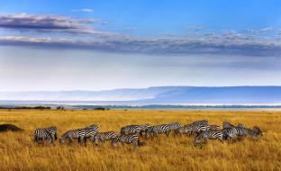 трава, Африка, небо, облака, саванна, зебры, стадо