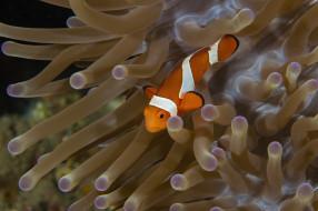 животные, рыбы, морское, дно, морские, глубины, рыбка, бело-оранжевая