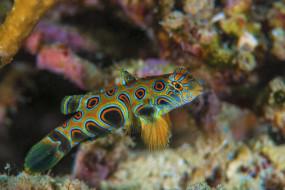 рыбка, морские глубины, море