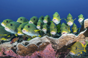 рыбки, море, морские глубины