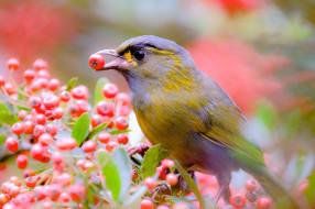 животные, птицы, ягоды, ветки, дерево, птица, природа