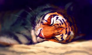 тигр, by Meorow, спит