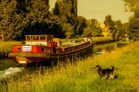 корабли, баржи, собака