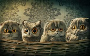 рисованное, животные, совы, кот