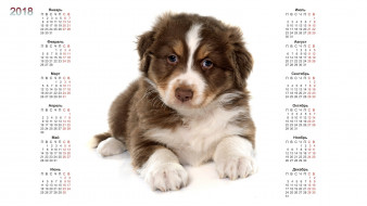 календари, животные, собака