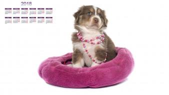 календари, животные, собака, белый, фон
