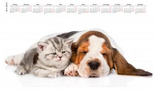 календари, животные, собака, кошка, белый, фон