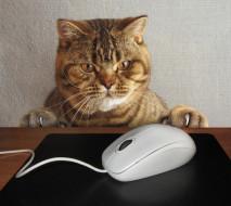 юмор и приколы, стол, когти, лапы, компьютерная, кот, коврик, мышка, морда, провод, ситуация, взгляд