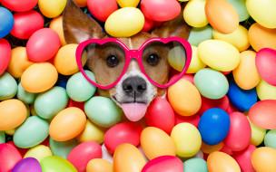 юмор и приколы, сердечки, собака, happy, funny, eggs, holiday, яйца, крашеные