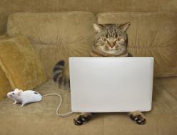 ноут, мышка, кот