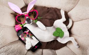 юмор и приколы, rose, holiday, happy, собака, сердечки, funny, роза, bunny, ears, pink, очки, уши, dog