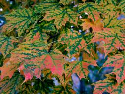 обои для рабочего стола 2560x1920 природа, листья, кленовые, осень