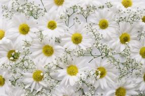 хризантемы, цветы, ветка, декор, фон