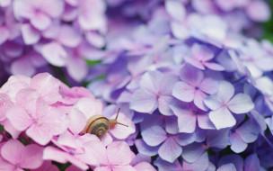 животные, улитки, улитка, цветы, гортензия, раковина