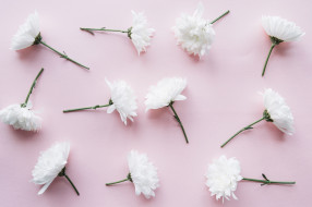 хризантемы, фон, декор, ветка, цветы