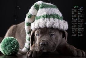 шапка, взгляд, собака