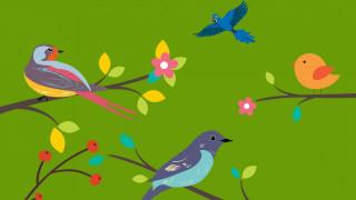 птицы, ветки