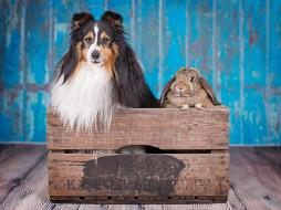 кролик, собака, ящик
