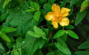 зеленый, желтый