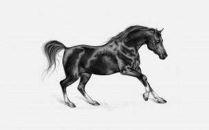 скакун, конь, жеребец