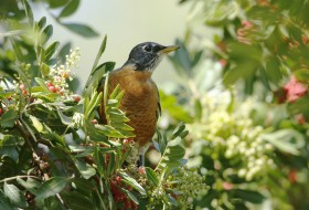 ягоды, дерево, птица, природа
