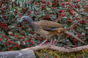 птица, природа, ягоды, птица, ветка, окрас, перья, дерево