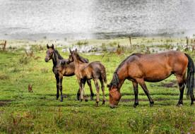 пейзаж, природа, красота, лошади, алтай