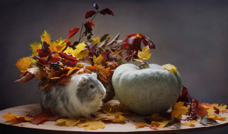 октябрь, осень, тыква, животные, морская свинка, композиция, листья