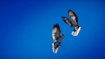 небо, танец, птицы