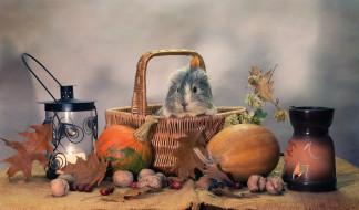 осень, свечи, юмор, хэллоуин, тыквы, композиция, октябрь, животные, морские свинки